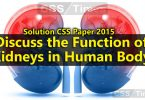 Discuss the Function of Kidneys in Human Body (CSS Paper 2015 Solution)